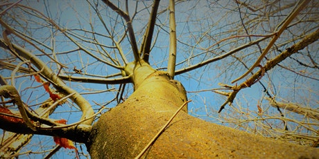 Virtual Homesteading:  Maple Tapping in Your Yard! tickets