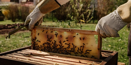 Inner West Beekeepers Monthly Meeting - July tickets