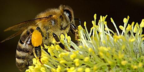 Inner West Beekeepers Monthly Meeting - August tickets