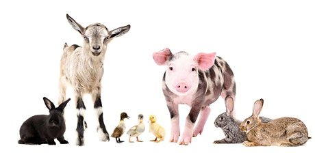 An ADF families event: Farmyard animal fun, Sydney and Liverpool tickets