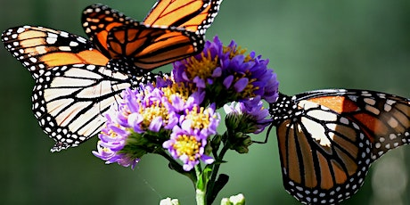 Workshop at The Battery: Gardening for Pollinators tickets