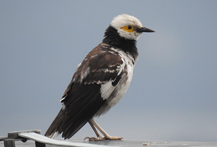 Birdwatching in HK image