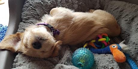 6 week Outdoor Puppy Course tickets