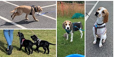 6 week Foundation dog training course tickets