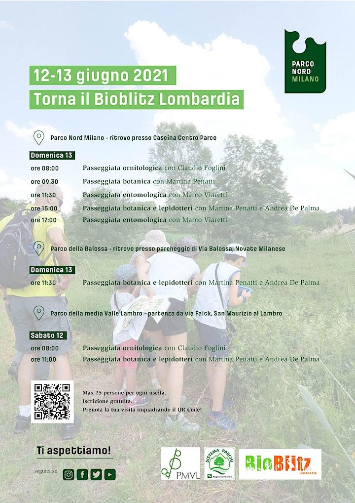 Immagine BioBlitz Lombardia 2021