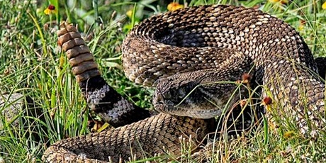 Rattlesnake, Porcupine and Skunk Avoidance Training for Dogs tickets