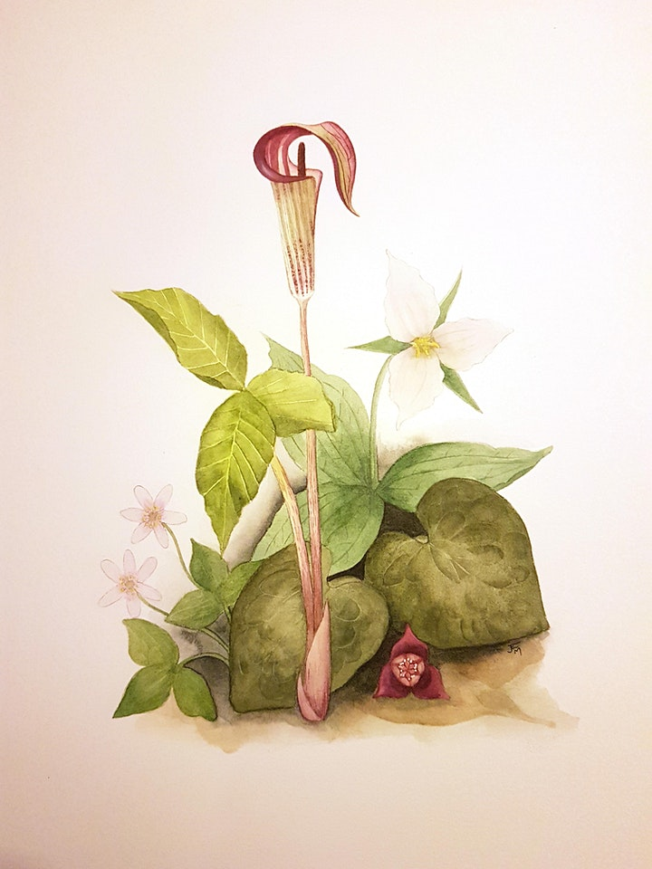3 Session Botanical Drawing with Jenna MacGuire image