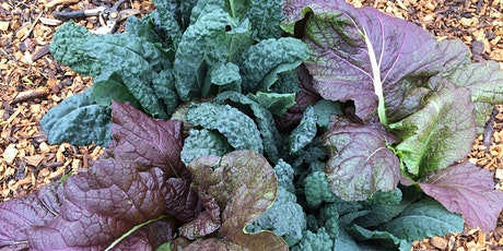Planning Your Fall Vegetable Garden tickets