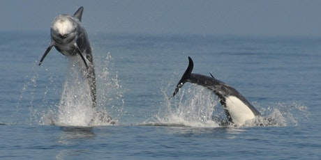 Whales, dolphins, and porpoises of the Isle of Man tickets