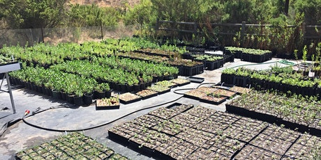 Native Plant Nursery Training: Basics of preparing and rooting cuttings tickets