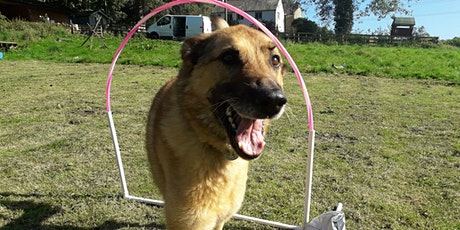 Canine Hoopers - Taster Session tickets