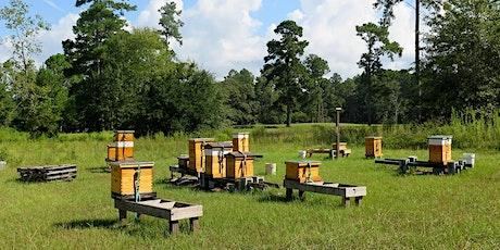 Copy of Copy of Beginners' Beekeeping - Full Weekend tickets