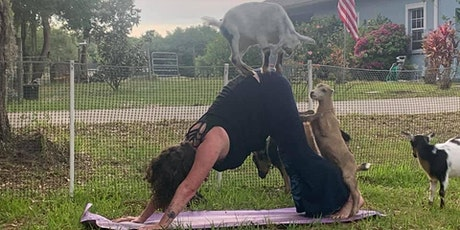 Sunset Goat Yoga & Goat Cheese tickets