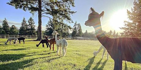 Alpaca Farm Yoga at Two Rubies Farmstead tickets