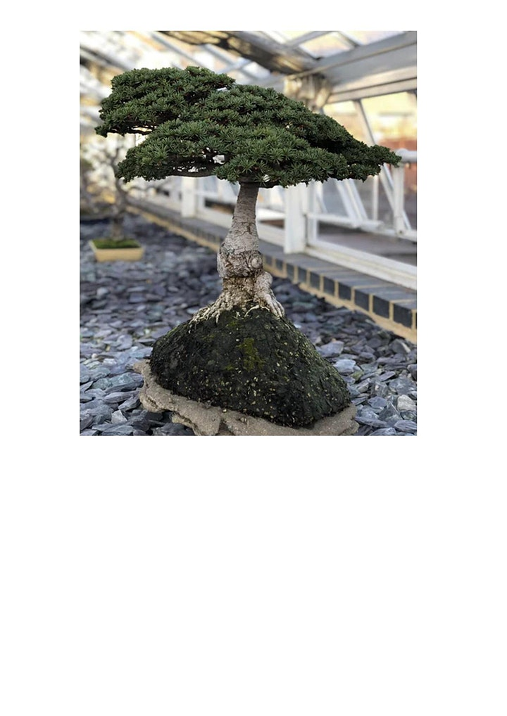 Beginners Bonsai Course image