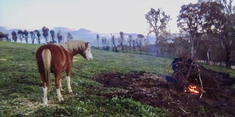 Managing  weeds on horse properties including fire recovery tickets