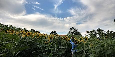 Sunflower Field & Wildflower Explosion tickets