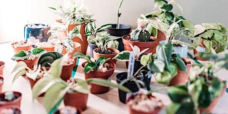 Sip and Swap 2021 - Indoor Plants tickets