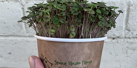 Let's Grow! Growing Microgreens With Sprout House Farms tickets