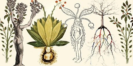 DRAWING PLANTS AND MINDFULNESS WORKSHOP tickets