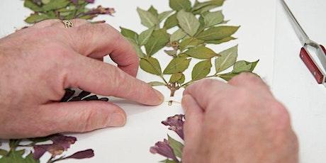 Taller de Prensado y preservado de plantas entradas