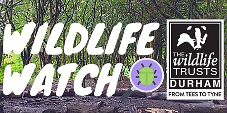 Wildlife Watch at Low Barns tickets