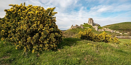 Timed entry to Corfe Castle (14 June - 20 June) tickets
