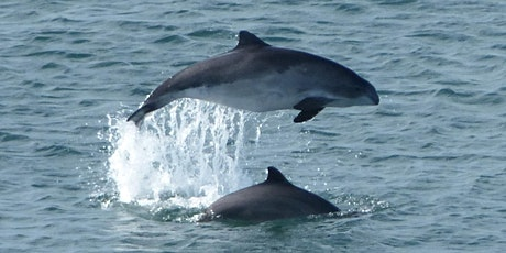 Picnic with a Porpoise tickets
