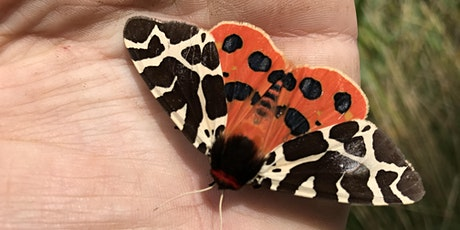 Moth Morning at Umbra Nature Reserve tickets
