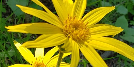 Wildcrafting Principles and Practices; Native Plants as Medicine tickets