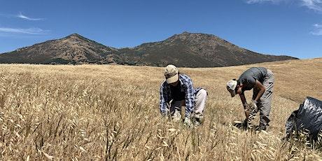 Restoring Native Grasslands tickets