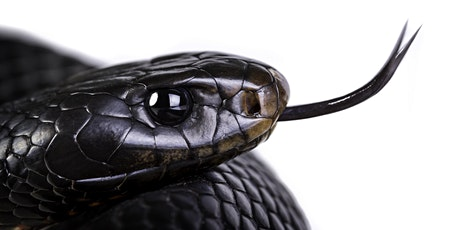 Wildlife Talk - Fraser Coast Snakes presented by Chris Muller 2ND SESSION tickets