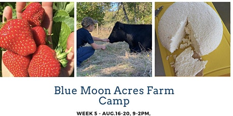 Blue Moon Acres  Camp Wk 5 - Cool Cows, Cheese, Bread & Jam Making + More! tickets