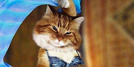 Belly Dancing & Kitties tickets