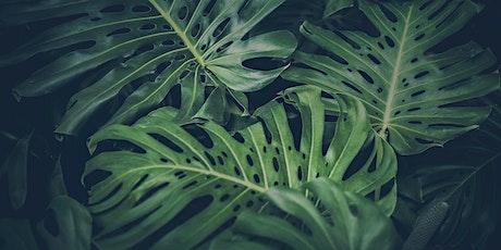 Indoor Plants - Masterclass tickets