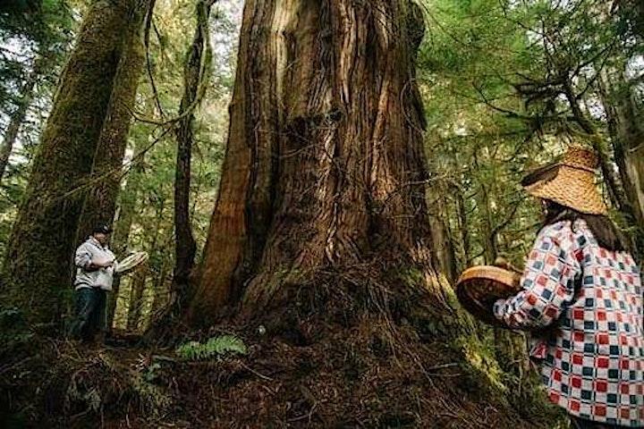 Fairy Creek Ancient Forests Benefit: Outdoor Dance w headphones image