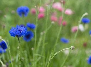 Hidden Gem Photowalk: Meadow of Wildflowers tickets