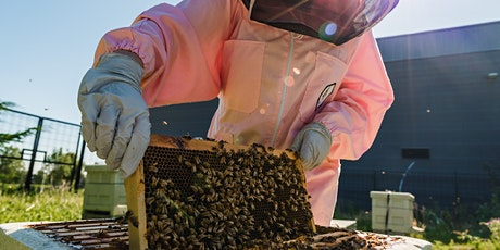 Just for the buzz! Bee-ginners beekeeping workshop tickets