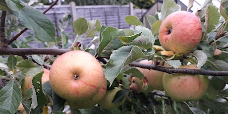 Introduction to Permaculture in London tickets