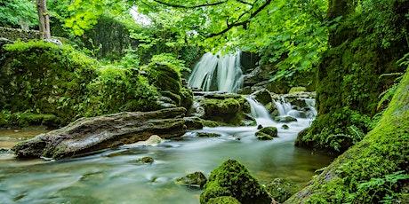 Managing Mediterranean forests for multiple ecosystem services biglietti