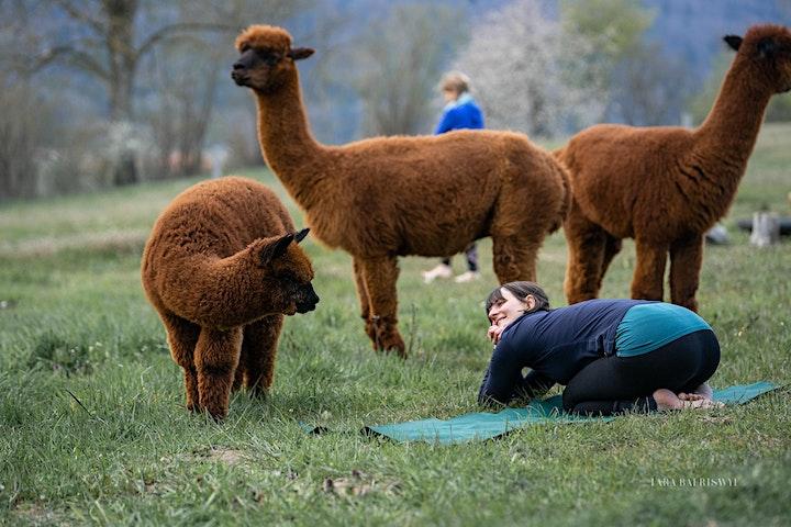 Yin Yoga  Klangreise inmitten Alpakas Bern Nord: Bild