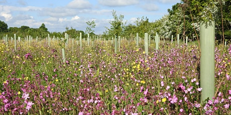 Forest of Flowers Walk and Talk (LEAF Open Farm Sunday Event) tickets