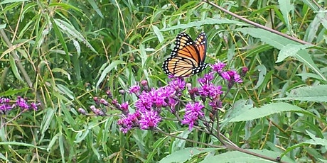 #21in21: Birds and Butterfly Photography Field Trip tickets