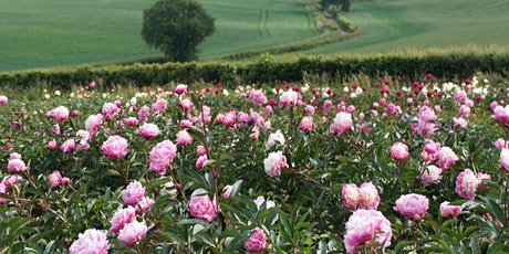 Peony Open Day at Little Budds Farm 2021 tickets