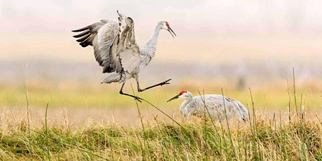 #21in21: Jasper-Pulaski Cranes Field Trip tickets