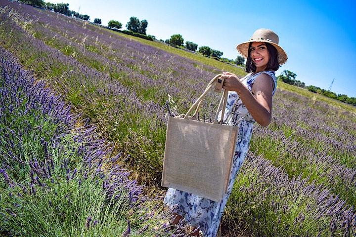 Lavender Living image