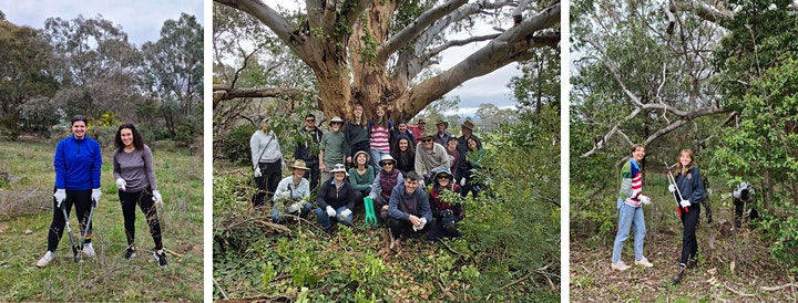 Landcare for our Future Finale: Tree Planting image