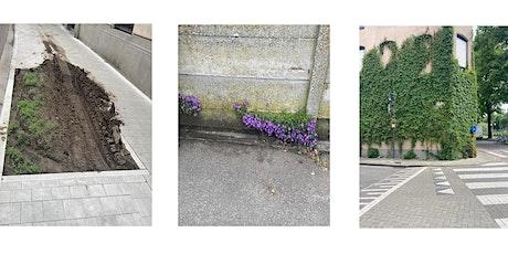 Ruimten Rondom - Botanische bezigheden, een wandeling als buurtbioloog tickets