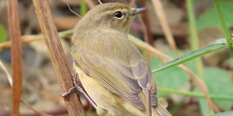 Bird watching walk at Greenwich Peninsula Ecology Park tickets