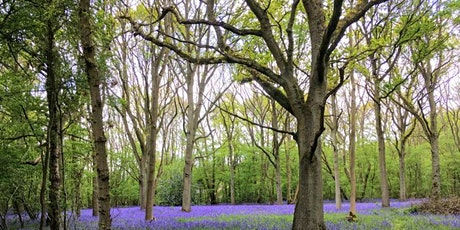 Walk and Talk in Wytham Woods tickets